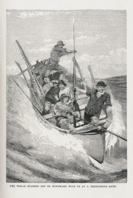 abner's whale, bullen, cachalot, whaling, whaler