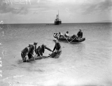 Taking a bullock out to a ship, Inisheer, 1939